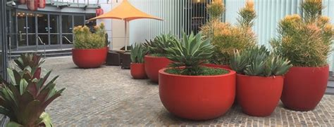 photo  large outdoor plant pots