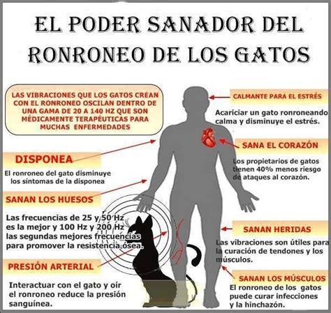 imagenes de luto con frases en español 17 mejores ideas sobre gatos y gatitos en pinterest