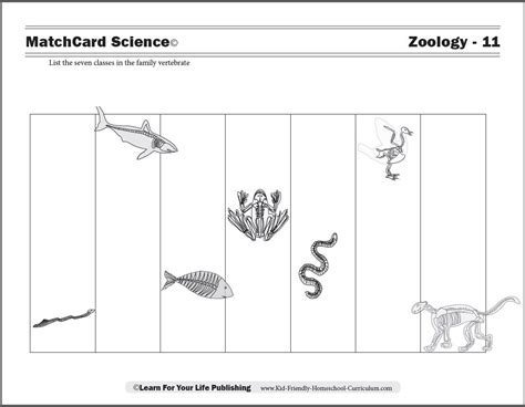 Printable Zoology Worksheets | zoology worksheets worksheets for all download and share