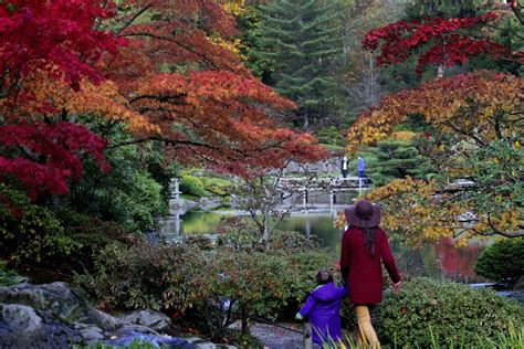 japanischer garten seattle photos autumn ablaze at japanese garden the seattle times