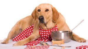 alimentazione x cani dogmagazine it alimentazione e benessere veterinario
