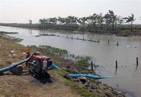 Pompa Air Untuk Sawah musim kemarau panjang sawah di jakarta masih produktif