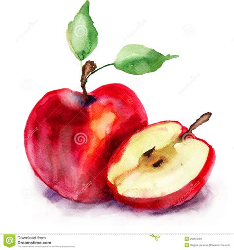 stylized watercolor apple illustration royalty free stock