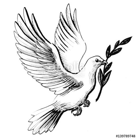quot flying white dove with olive branch as a symbol of peace