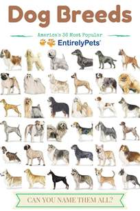 types of dogs popular dog breeds tumblr