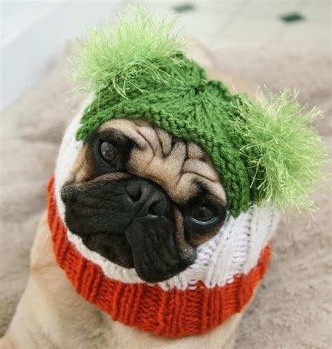 pug rescue ireland 126 best images about knit crochet for pets on