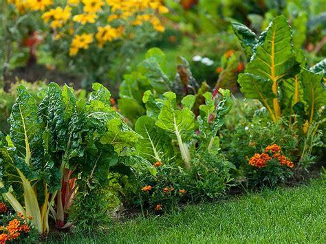 edible gardens how to grow an edible garden saga