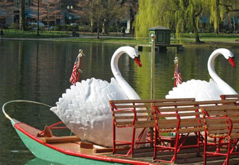 swan boats boston public garden boston swan boats top public garden attraction