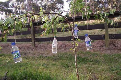 best way to water fruit trees 25 best trees ideas on