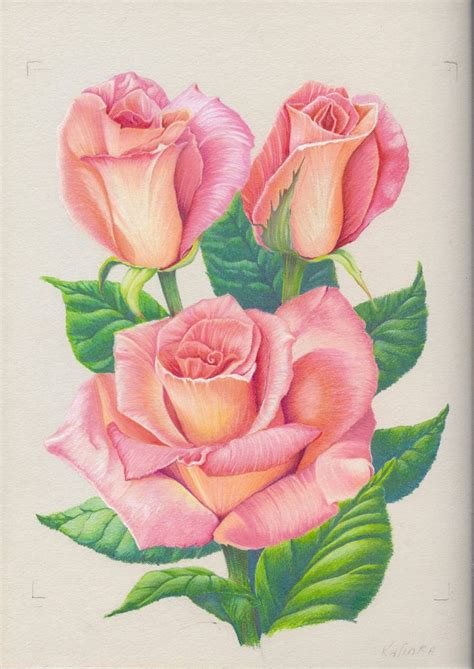 pink drawing pink roses by 1976kunako deviantart com on deviantart