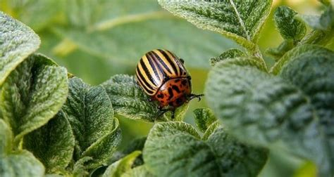 organic gardeners guide  repelling insects