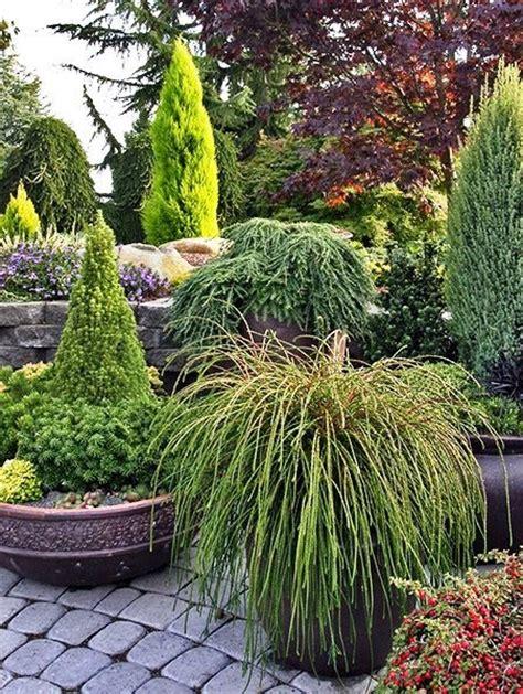 Conifer Garden Ideas 276 Best Conifers Images On Pinterest Landscaping Ideas Yard Ideas And Garden Ideas