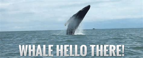 wale gif whale hello gif find share on giphy