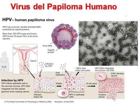 virus del papiloma humano vph fotos cna el enigm 225 tico virus del papiloma humano vph