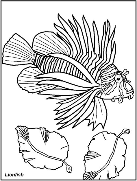 fish coloring pages pdf of fish for adults colouring pages az coloring pages