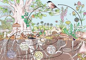 permaculture pour les nuls