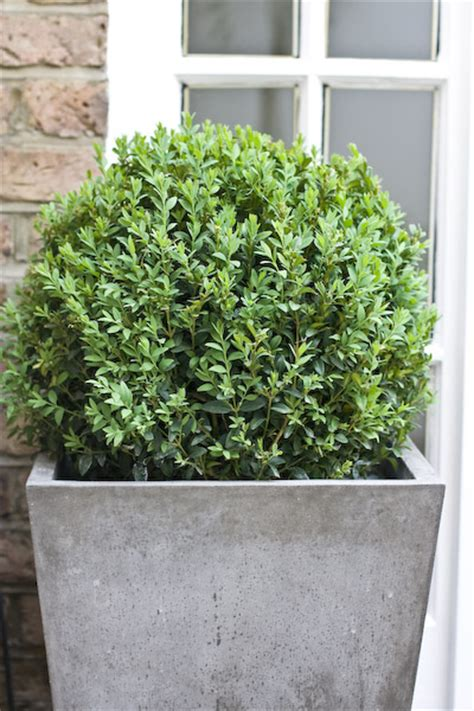 Luxury Planters by Patio Planters Outdoor Planters Designer Planters