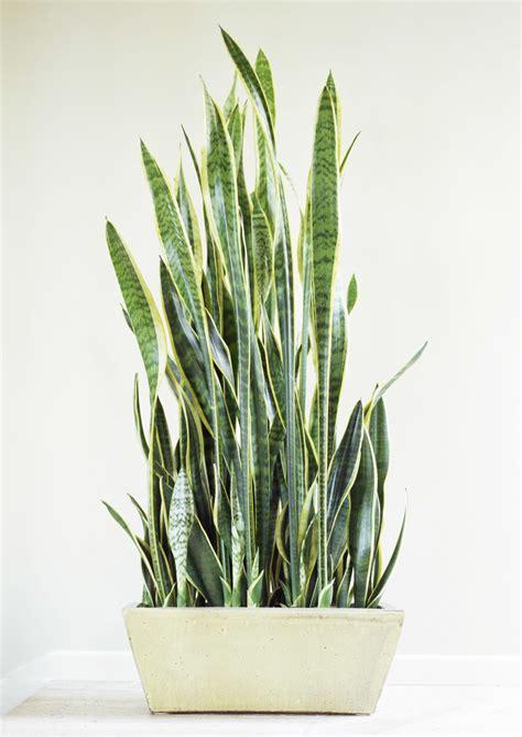 indor plants indoor plants images modern house