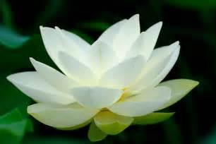 White Lotus Religion No Religion Buddhadasa Bhikkhu Standing In An Open Field