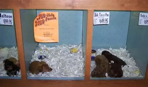 pet store that sells puppies pet store puppies never a thing bauhound haus inc