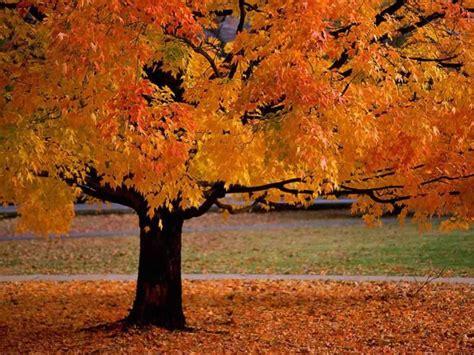 Curren King Power i up that tree when it s not fall 5 bucks 5 on it