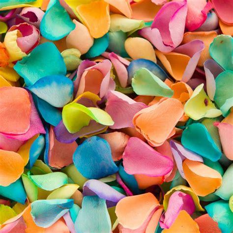 Bloom Box Big Rainbow Mesmerizing Preserved Flower rainbow freeze dried petals petals roses