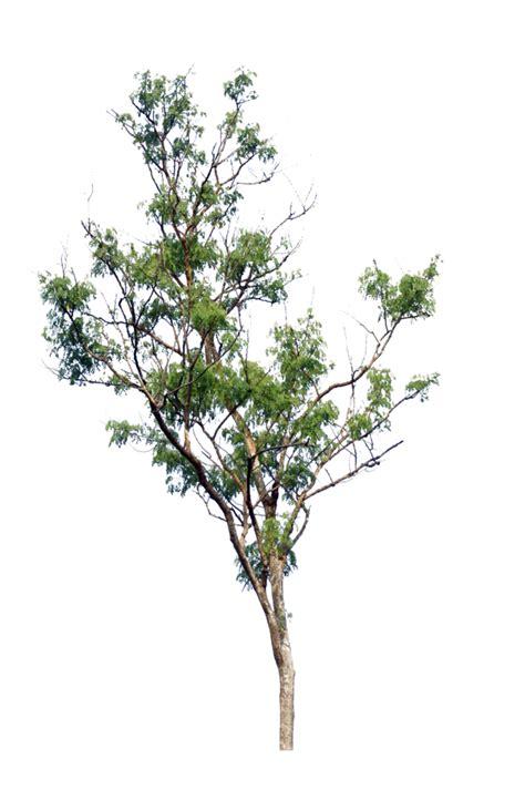 imagenes png vegetacion tree png by blur stock on deviantart