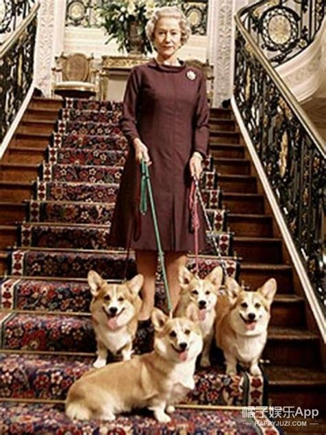 queen elizabeth s dog not in front of the corgis