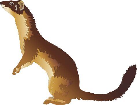 Weasel Clipart mustela frenata tailed weasel mammals vector weasel