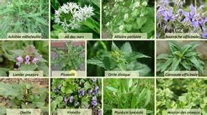 cuisine de plantes sauvages les saisons de la vall 233 e