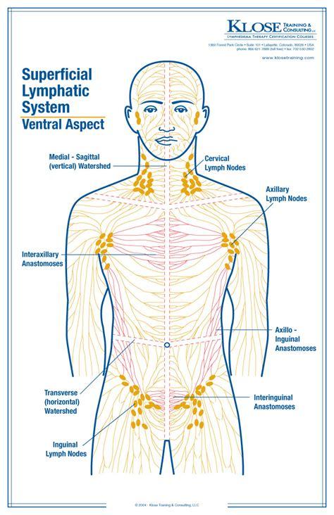 lymph nodes location of lymph nodes pelvic location of axillary lymph
