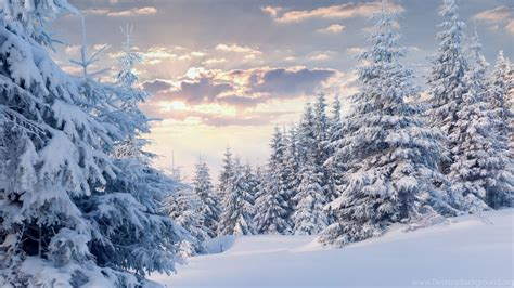 wallpaper 4k winter winter forest with snow wallpapers wallpapers 4k