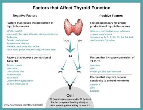 Does Detox Affect Thyroid by Thyroid Health Symptoms Diet Functional Medicine Therapy