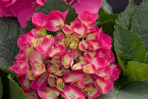 hydrangea rubber st the headlines read fiscal cliff disaster averted if anyone
