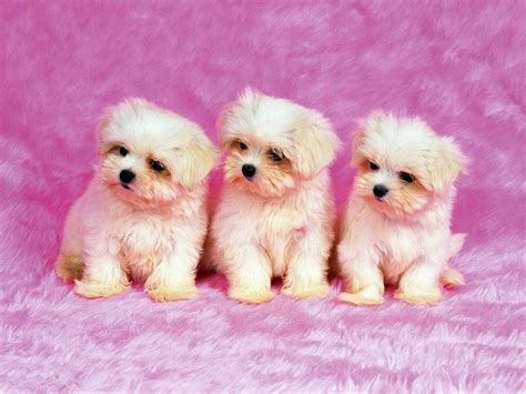 cutest puppies dogs dogs picture