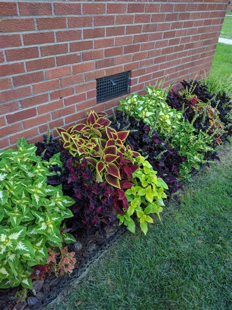 25 best ideas about front house landscaping on pinterest front landscaping ideas front yard