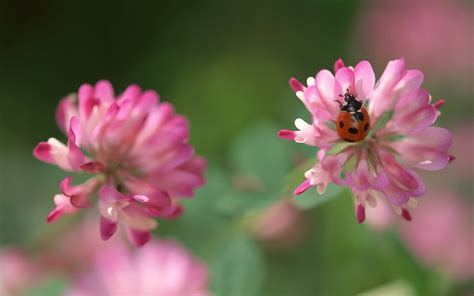 imagenes flores salvajes pack 270 wallpaper fleurs gratuit fond d ecran gratuit