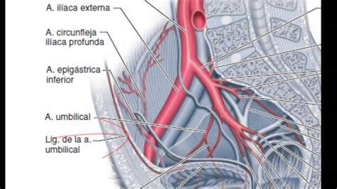 arteria iliaca externa by abner hernandez youtube - Cadenas Iliacas Comunes