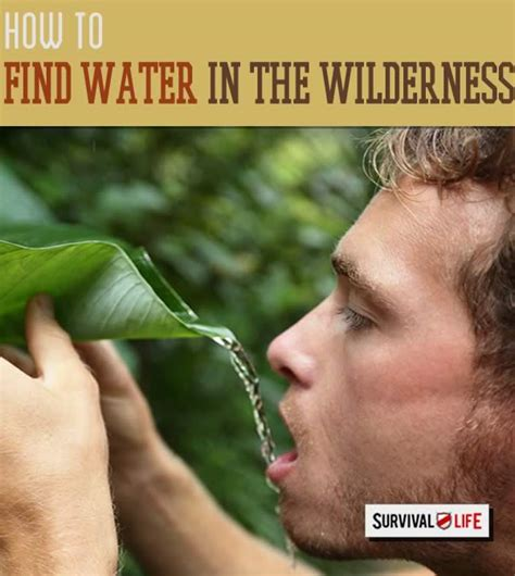 how to find water when lost in the wilderness survival life