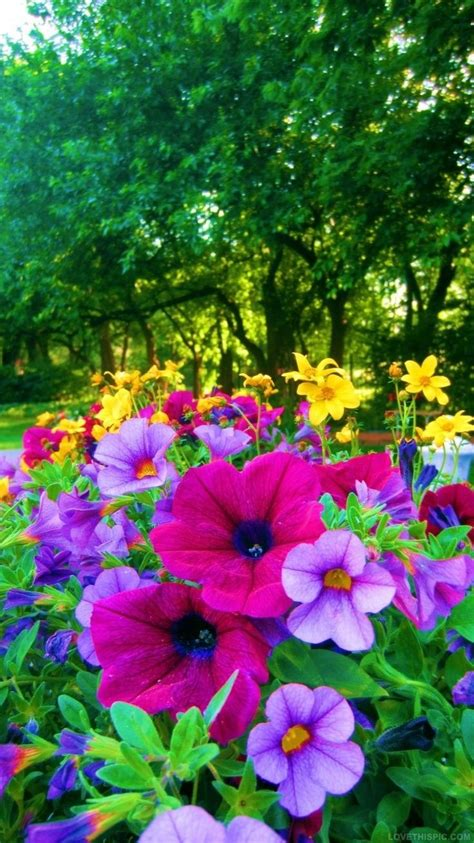 bright colored flowers bright colored flowers for the garden colorful flowers