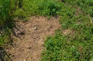 mauvaises herbes jacky la verte