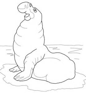 Elephant Seal Coloring Page Sketch sketch template