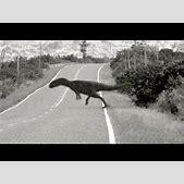 Dinosaur caught...