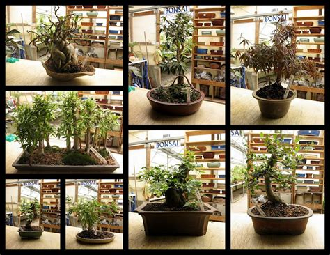Potted Plants bensell greenhouse indoor bonsai