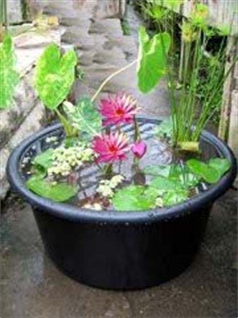 small water gardens in containers beautiful water garden tranquility on water