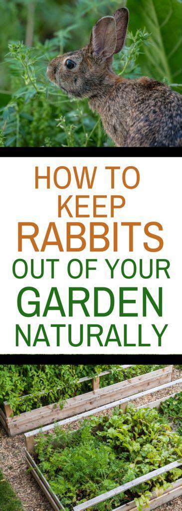 2904 best gardening images on pinterest fairies garden fairy gardening and miniature gardens