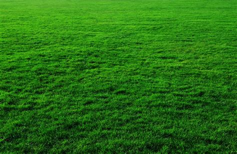 free photo background green grass lawn free image on