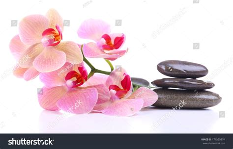 composition with beautiful blooming orchid with water composition with beautiful blooming orchid with water