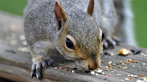 what do squirrels like to eat reference com