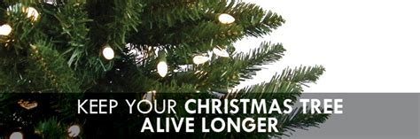 keep your christmas tree alive longer this year